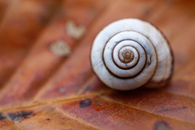 Pequeno caracol no jardim
