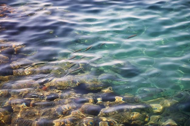 Pequeno cardume de peixes em águas cristalinas turquesa do mar vermelho. vista de cima para baixo dos peixes vívidos sob a superfície das águas cristalinas do mar. ondas na superfície azul do mar vermelho