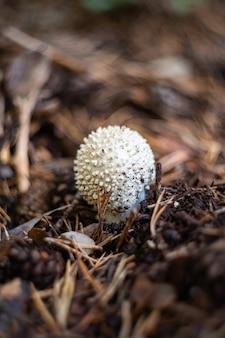 Pequeno cogumelo branco crescendo na floresta