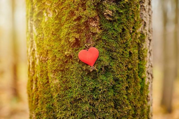 Pequeno coração de papel em uma árvore
