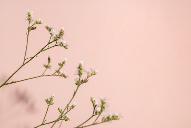 Pequeno detalhe de flor branca de uma flor de gipsofila em fundo rosa com espaço de cópia para seu projeto ...