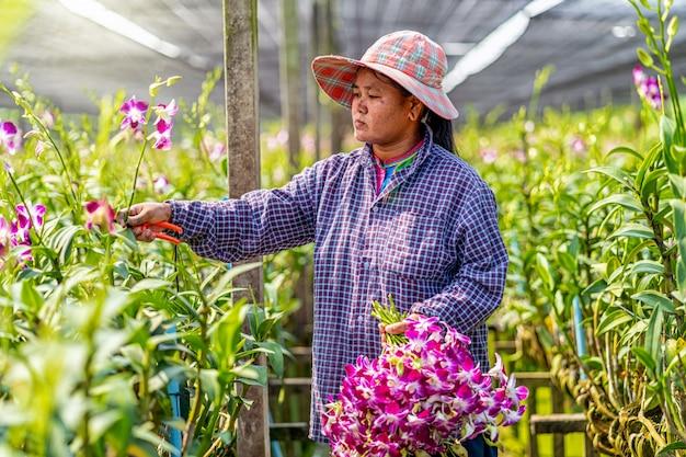 Pequeno empresário asiático da fazenda de jardinagem de orquídeas