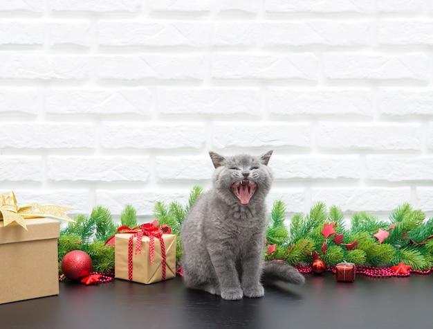 Pequeno gatinho britânico com decoração de natal