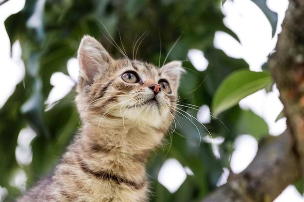 Pequeno gatinho curioso em um fundo de folhas de árvore olhando para cima