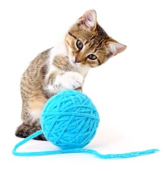 Pequeno gatinho engraçado e cabo de linha isolado