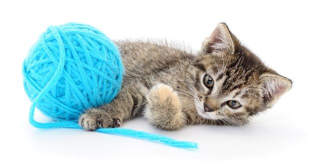 Pequeno gatinho engraçado e cabo de linha