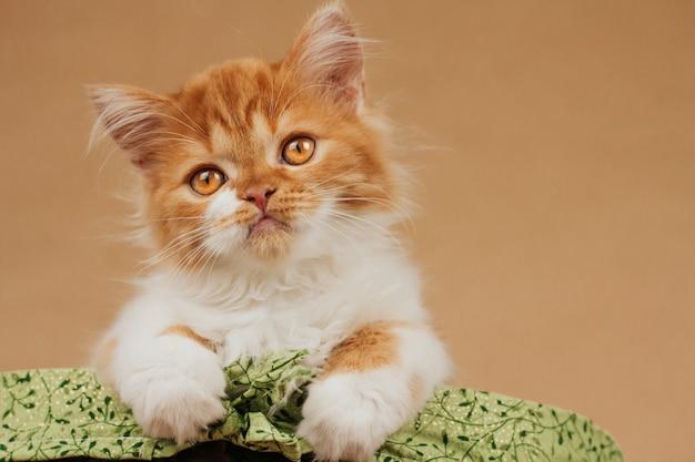Pequeno gatinho fofo de gengibre em uma cesta verde sobre fundo marrom claro