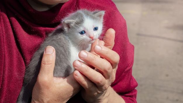 Pequeno gatinho indefeso nos braços de uma mulher.