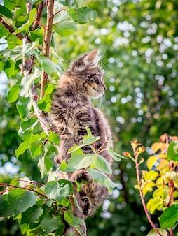 Pequeno gato listrado senta-se em um galho de uma árvore. animais na natureza