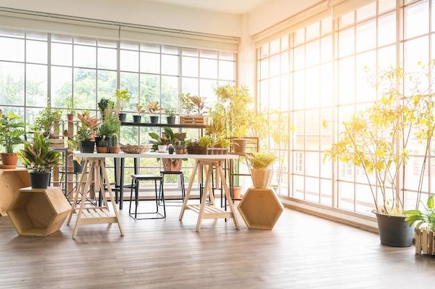 Pequeno jardim dentro de uma pequena sala, lugar aconchegante de aspecto muito descontraído pela manhã