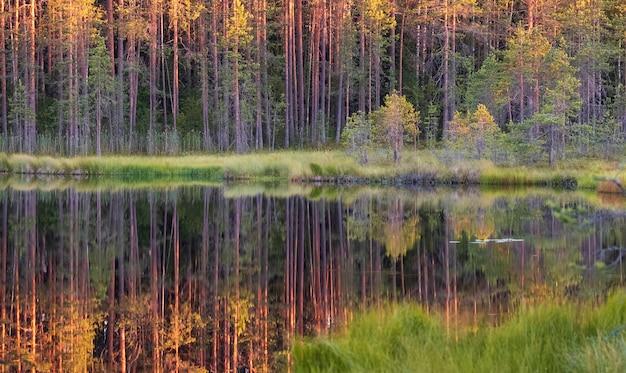 Pequeno lago coberto de vegetação na floresta ao pôr do sol. paisagem selvagem do norte