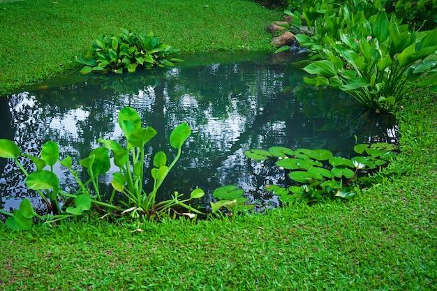 Pequeno lago como parte do paisagismo com grama aquática e plantas verdes e água cercada por uma vegetação exuberante