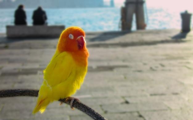Pequeno papagaio empoleirado em um galho na praça de são marcos, em veneza.