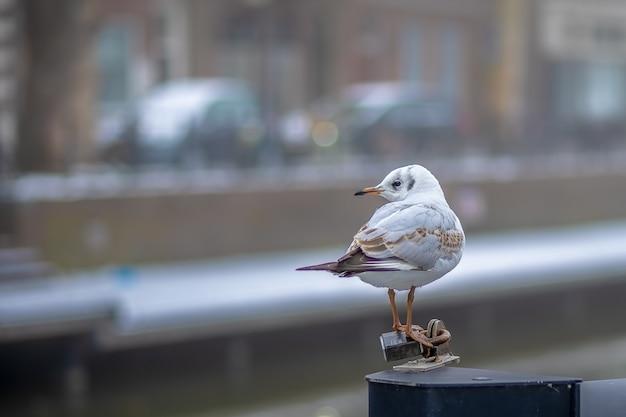 Pequeno pássaro branco em pé sobre um pedaço de metal durante o dia