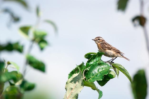 Pequeno pássaro canoro sentado em um galho