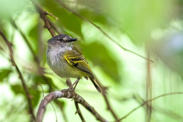 Pequeno pássaro descansando em um galho