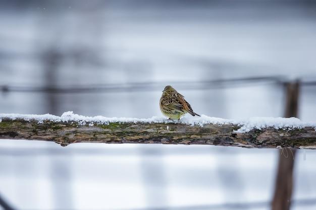 Pequeno pássaro em um galho no inverno