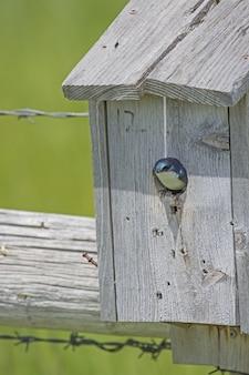 Pequeno pássaro em um ninho de caixa de madeira com vegetação sob a luz solar no fundo desfocado
