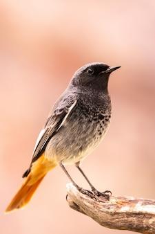 Pequeno pássaro em um tronco