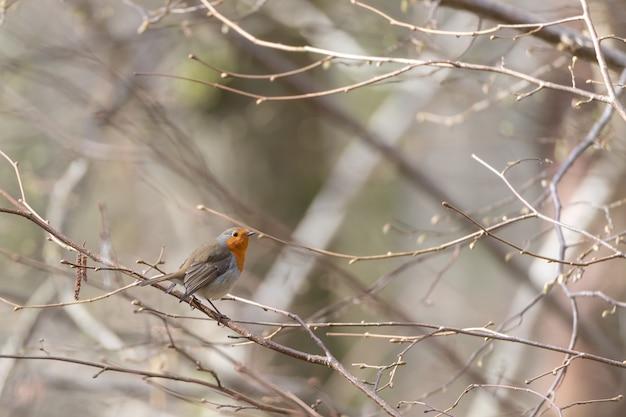 Pequeno pássaro fofo sentado no galho de uma árvore