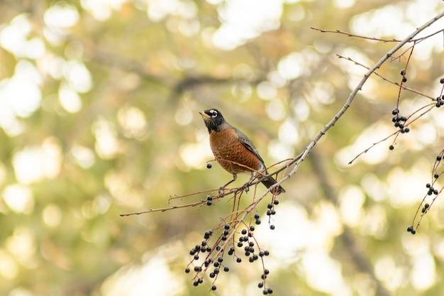 Pequeno pássaro marrom em um galho de árvore