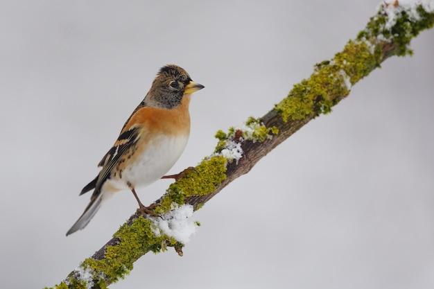 Pequeno pássaro no galho de árvore no fundo branco
