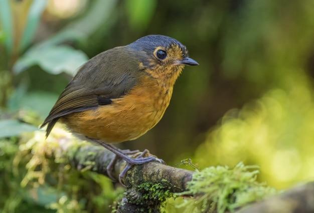 Pequeno pássaro rastejante empoleirado em um galho