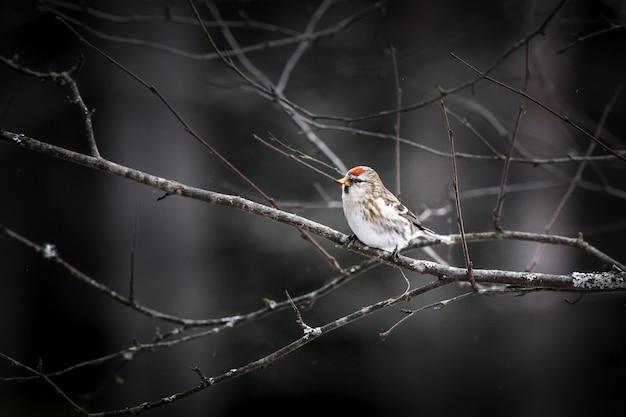 Pequeno pássaro sentado no galho de uma árvore