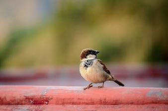 Pequeno pássaro