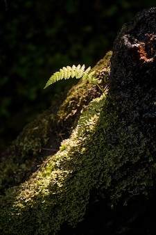 Pequeno pedaço de luz na floresta