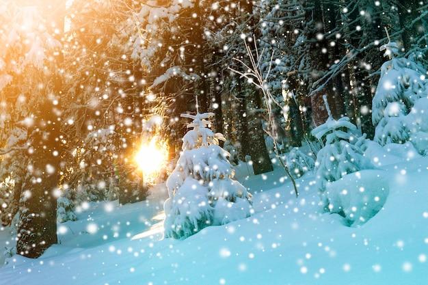 Pequeno pinheiro coberto de neve na floresta de inverno