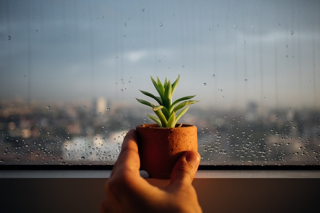 Pequeno pote de haworthia nas janelas chuvosas.