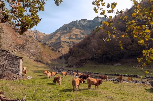 Pequeno prado com rebanho de vacas na área de vega de pas, castro valnera