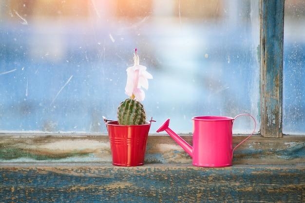 Pequeno regador rosa e cacto em flor na janela antiga