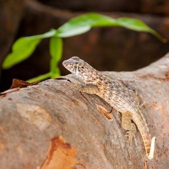 Pequeno réptil caminhando na superfície de uma árvore com padrões de cores iguais aos da madeira