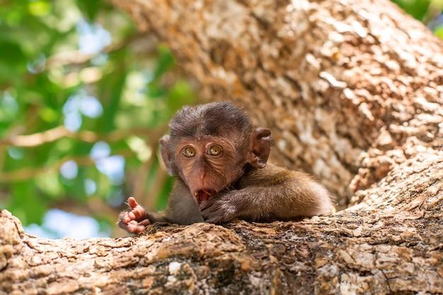 Pequeno retrato de macaco. senta-se em uma árvore