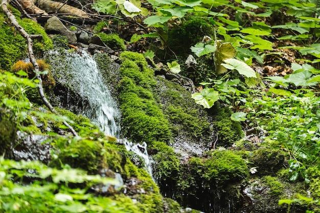 Pequeno riacho rápido na floresta fluindo entre pedras
