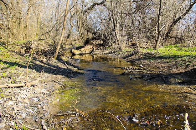 Pequeno rio na floresta na primavera