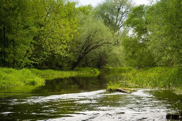 Pequeno rio na zona rural e arbustos verdes no dia de verão.