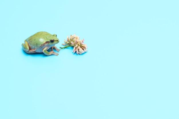 Pequeno sapo verde com flor de trevo em cartão de fundo azul com espaço de cópia