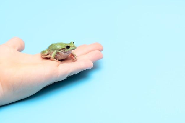 Pequeno sapo verde na mão em um cartão de fundo azul com espaço de cópia