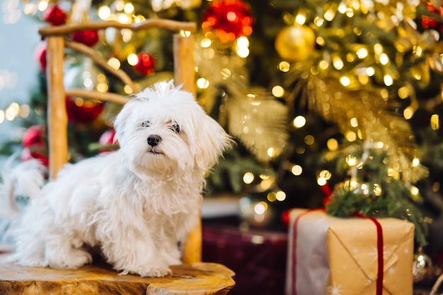 Pequeno terrier branco no fundo da árvore de natal.