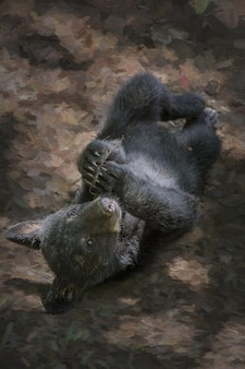 Pequeno urso preto fofo deitado no chão