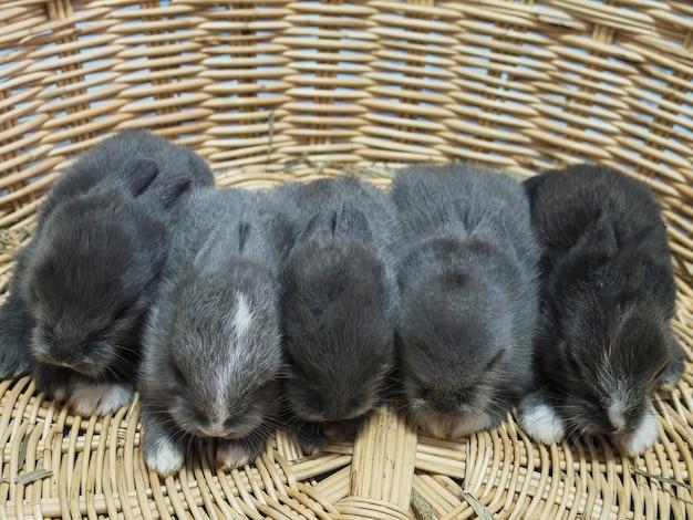 Pequenos adoráveis pequenos coelhos tailandeses locais