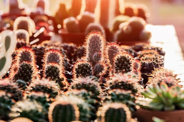 Pequenos cactos e suculentas na loja de flores