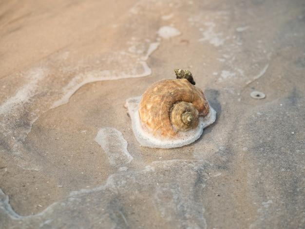 Pequenos caracóis marinhos presos na praia de areia