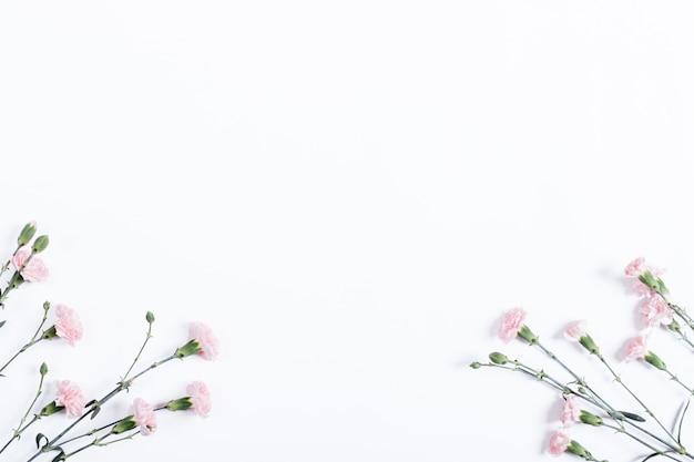 Pequenos cravos rosa em fundo branco
