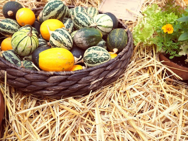 Pequenos melões e melancias estão na cesta, outono e colheita