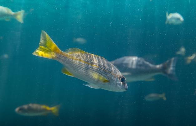 Pequenos peixes nadando debaixo d'água
