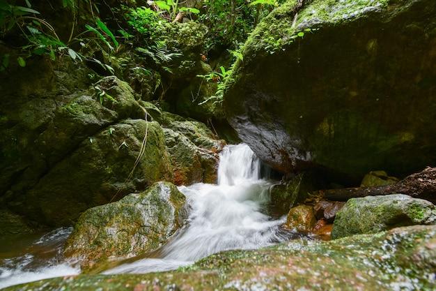 Pequenos riachos no vale.